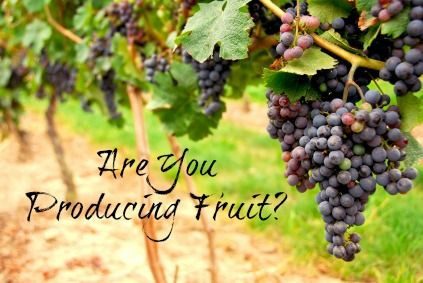 ARE YOU PRODUCING FRUIT