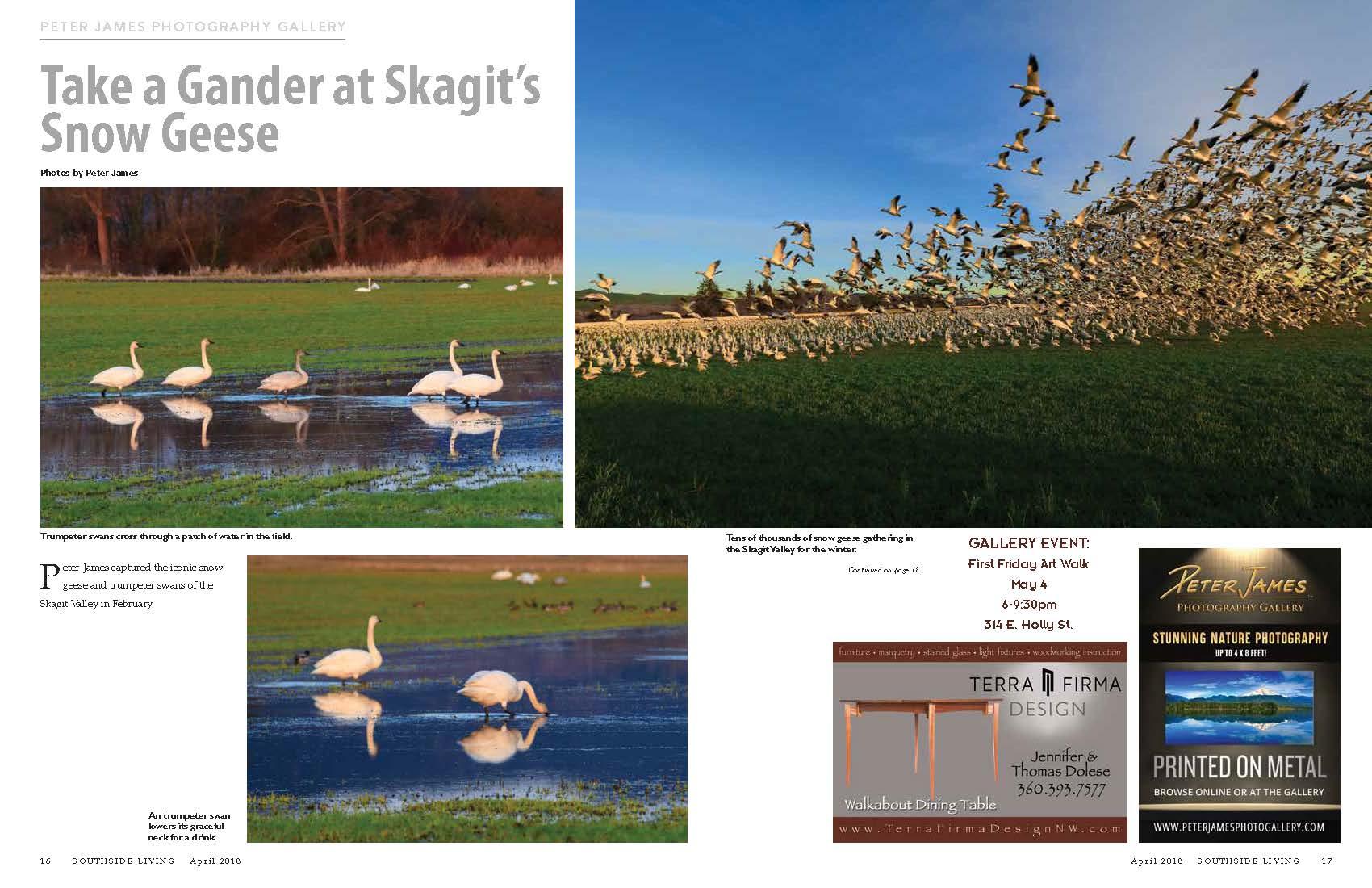 Skagit Valley Birds