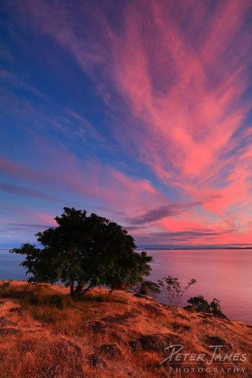 Intense Pink Sunset On San Juan