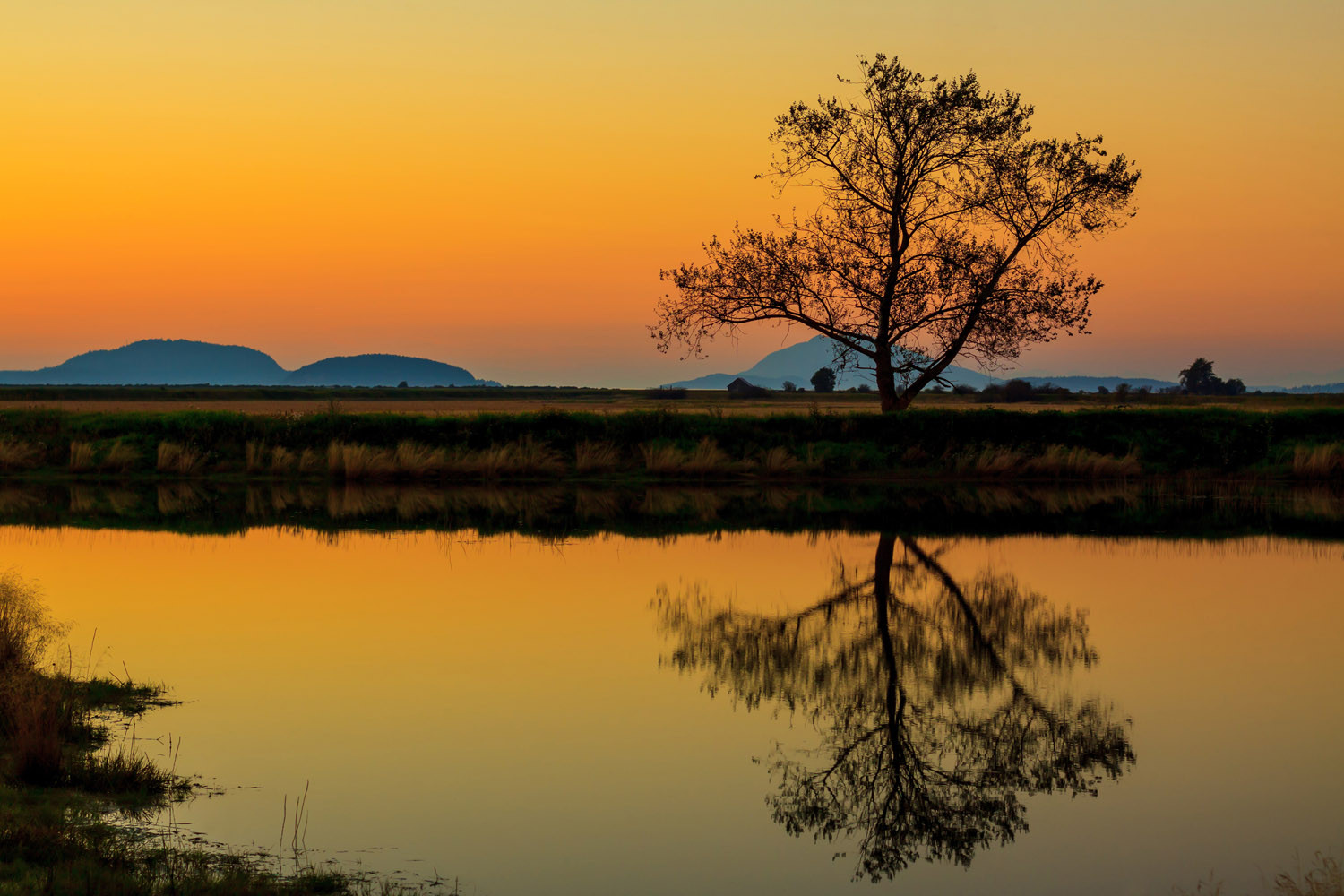 Lone-Tree-At-Sunset.jpg