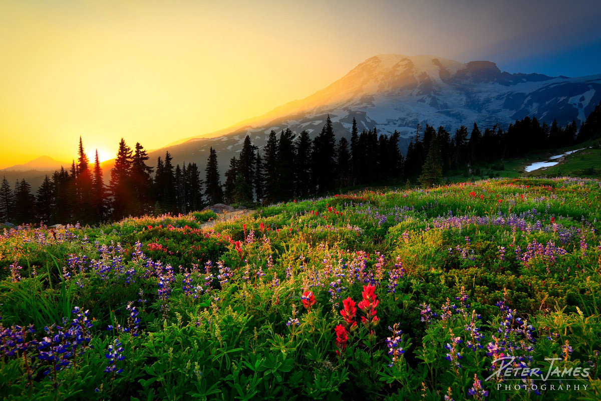 Mount Rainier Sunset In Paradise