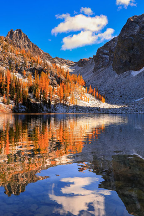 Golden Larches Dance on Blue Lake