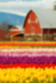 Colorful Skagit Farmlands Barn Stock Photo by Peter James