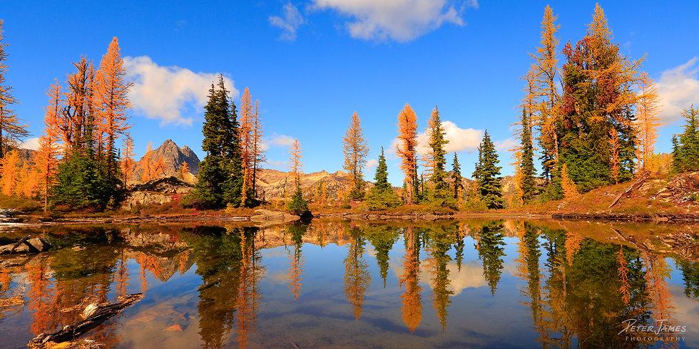 Golden Larch Lake
