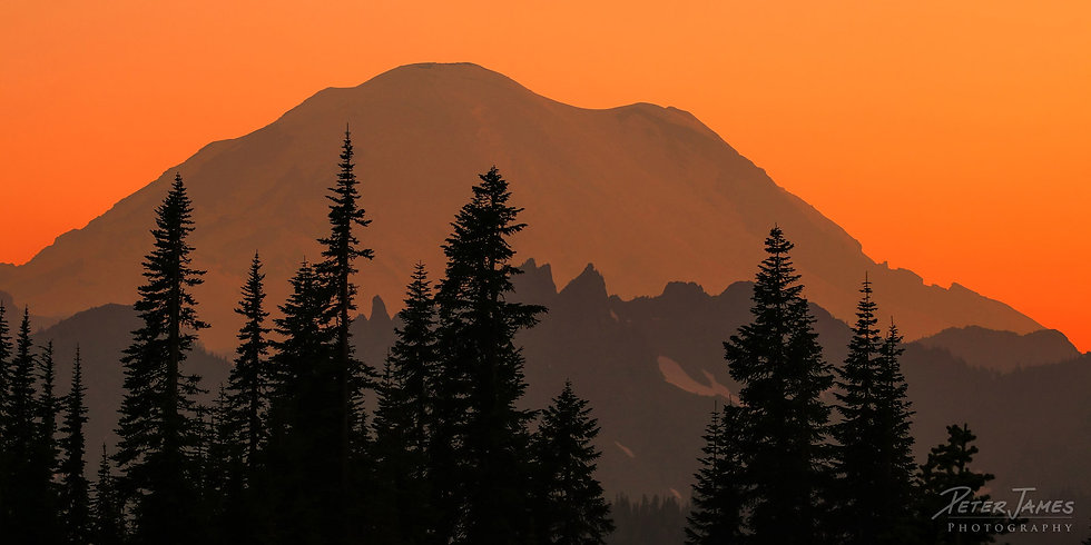 Mount Rainier With Tree Silhouettes