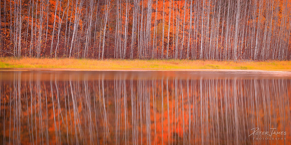 fine art fall forest photography art prints for sale