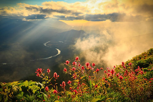 Nature Photo of Skagit River and Wildflowers
