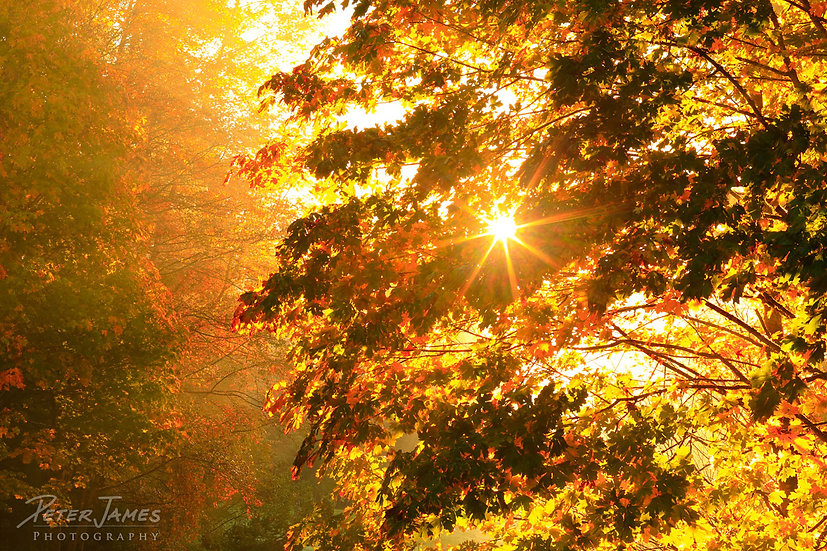 Fall Splendor Sunburst