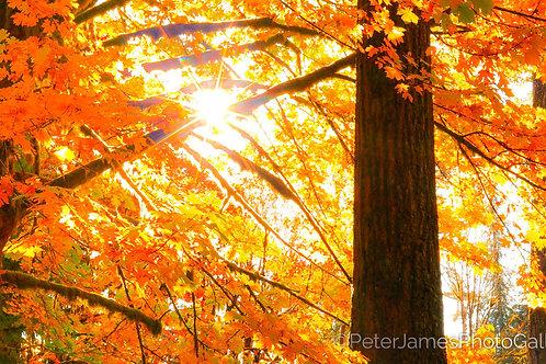 Rockport Autumn Sunburst