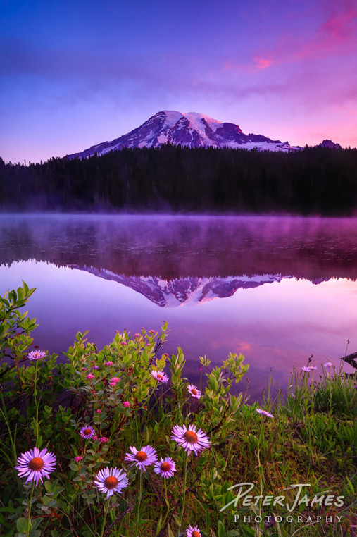 Rainier Reflection With Daisies At Dawn