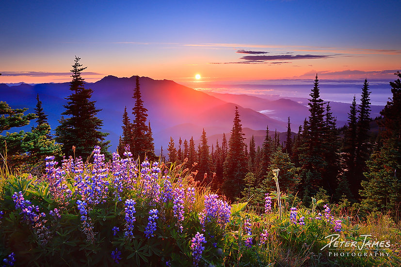 PNW Olympic Mountain photography wall art