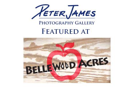 Bellewood Acres Gallery - Artist's Reception