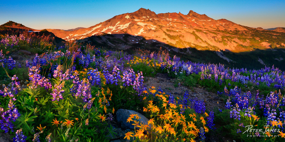 Purple And Gold At Goat Rocks
