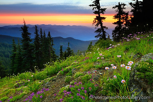 Skyline Divide Purple Wildflowers