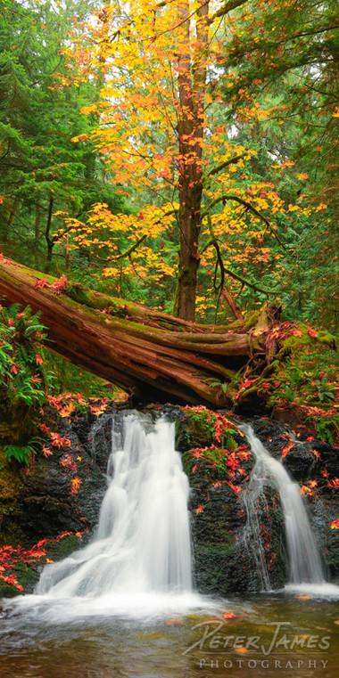 Rustic Falls in Fall
