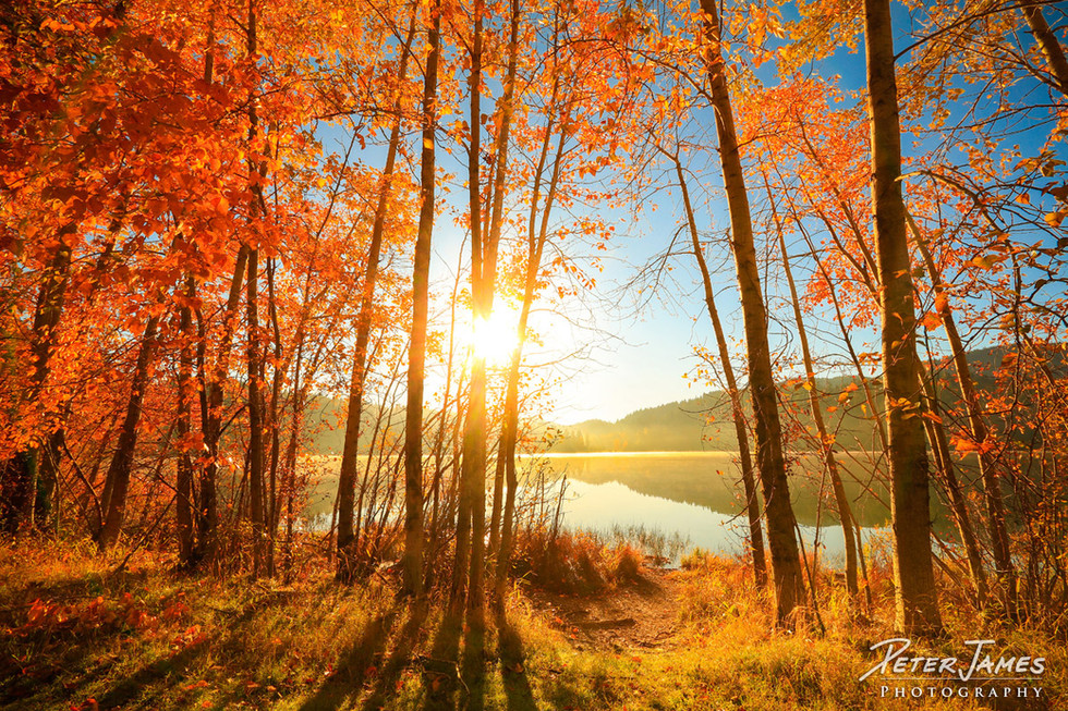 Sunshine Through Fiery Lakeside Trees