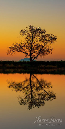 fine art tree silhouette photography art prints for sale