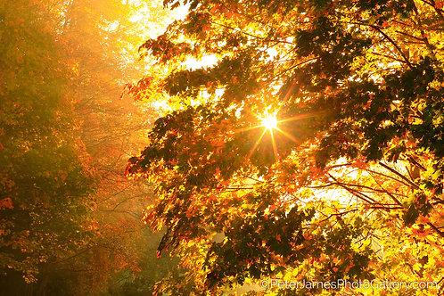 Fall Splendor Sunburst