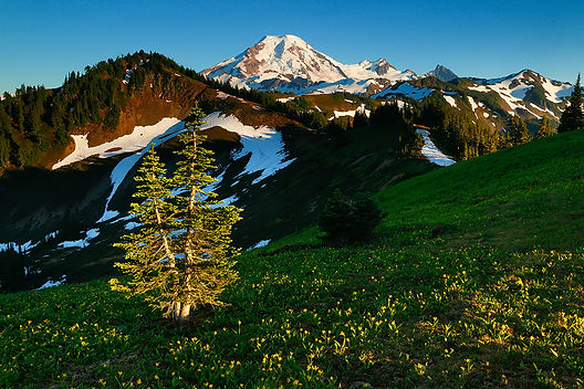 Mount Baker Landscape Photography Wildflowers Bellingham WA