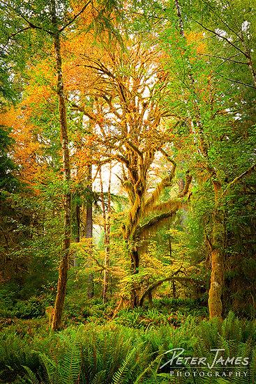 fine art rain forest photography art prints for sale