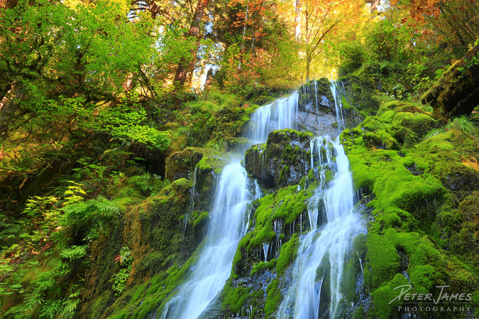 Amazing Moss Covered Waterfall In The Hoh Rainforest