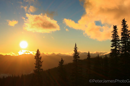 Mount Olympus Sunset With Noble Fir