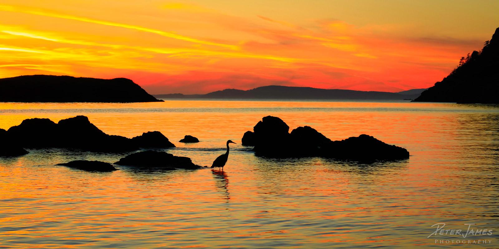 Rosario Beach Heron Silhouette