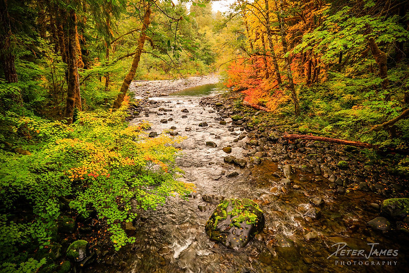 Sol Duc River Fall Color