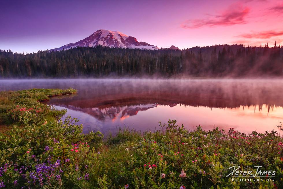 Forest and Flowers Encircle Mt Rainier