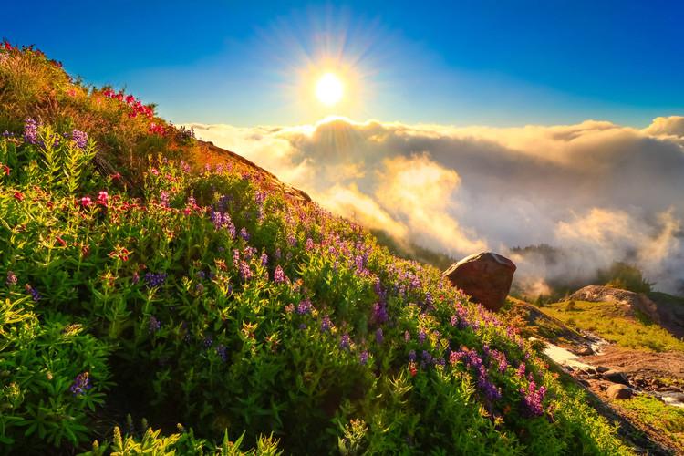 Sunburst-Across-Alpine-Wildflowers.jpg
