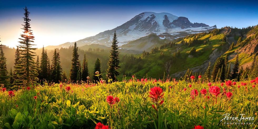 Summer On Mount Rainier's Skyline Trail