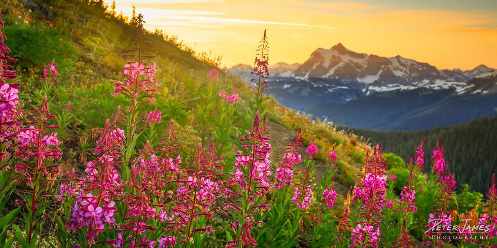 Wildflower Morning With Mount Shuksan
