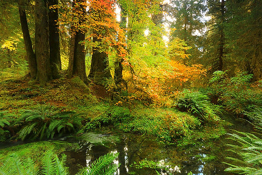 Rainforest Photography Pacific Northwest Washington State