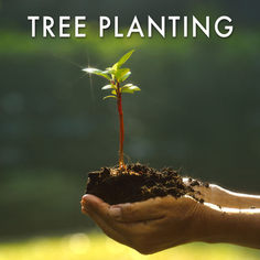 Planting Trees for Every Nature Photo Sold