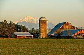 Mount Baker Behind Skagit Farm Bellingham WA Stock photo
