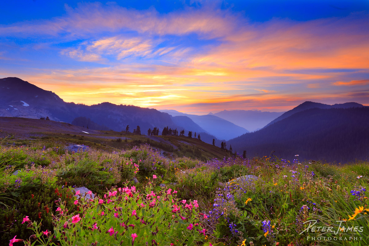 Pink and Purple Mountain Majesty