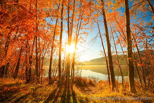 Sunshine Through Fiery Lakeside Trees