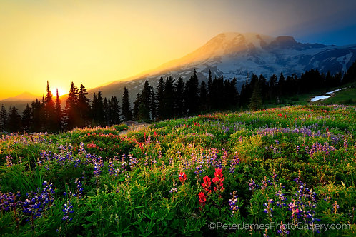 Mount Rainier Sunset In Paradise