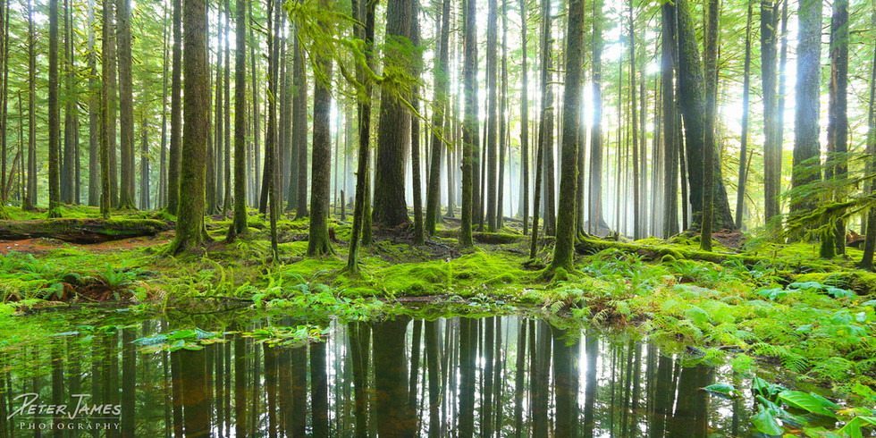 Reflecting Pool in Misty Forest