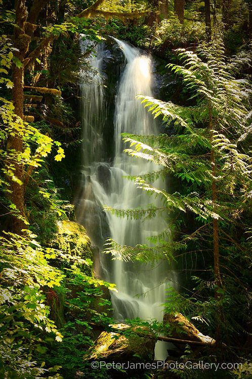 Quinault Valley Waterfall