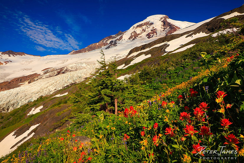 Vibrant Wildflowers Skirting Mount Baker
