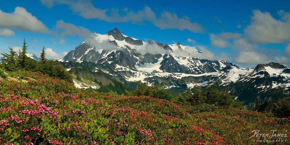 Mt. Shuksan Above Heather Meadows