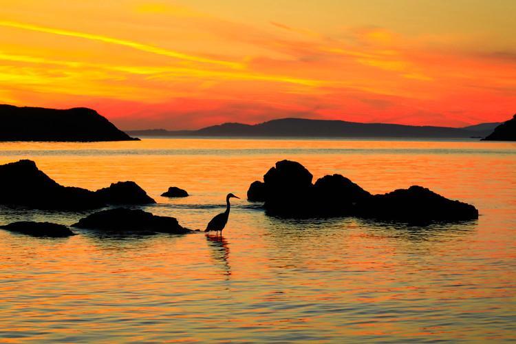 Rosario-Beach-Heron-Silhouette.jpg