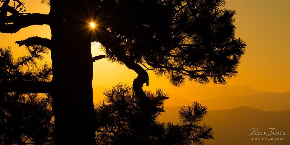 Sunlight Through Silhouette