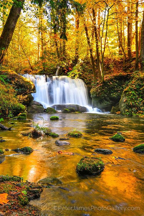 Autumn At Whatcom Falls