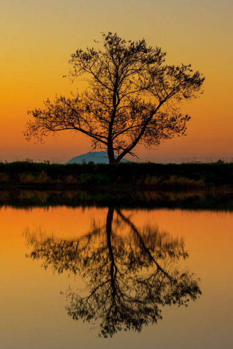 Lone Tree Reflection