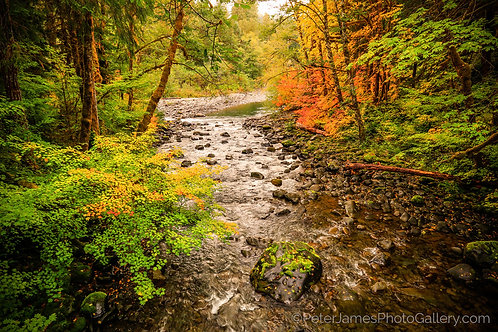 Sol Duc River Fall Color