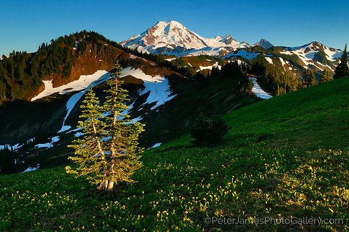 Twin Trees on Skyline Divide