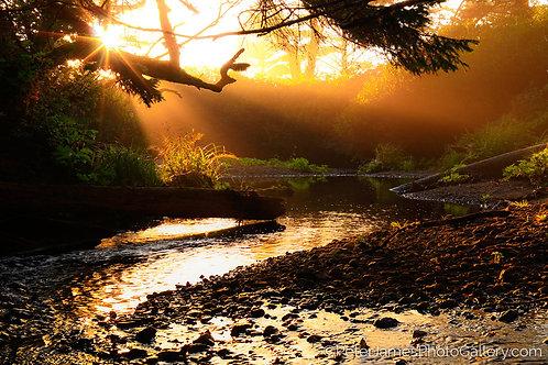 Ellen Creek Sunbeam Magic