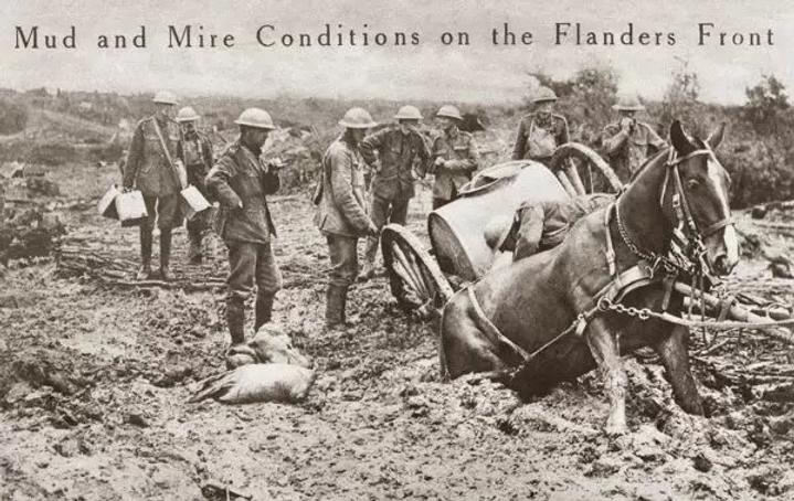 world-war-i-flanders-horse-sunk-haunches